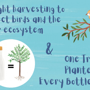 one tree planted for every bottle sold
